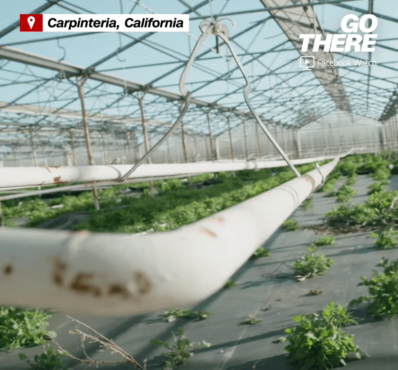 Marijuana saved these flower farmers' business